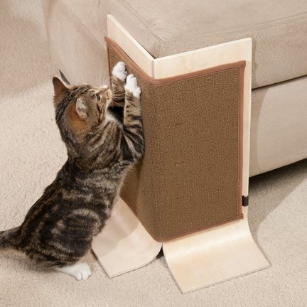 Best Keep Cat From Scratching Couch 31 Sofa Design Ideas With