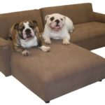 Luxury Dog Couch Bed 13 About Remodel Living Room Sofa Ideas with Dog Couch Bed