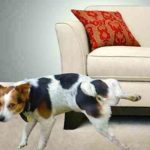 Luxury Dog Peed On Couch 55 On Modern Sofa Inspiration with Dog Peed On Couch