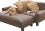 New Dog Couch Bed 56 About Remodel Sofas and Couches Set with Dog Couch Bed