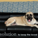 Perfect Spray To Keep Dogs Off Couch 79 On Sofa Table Ideas with Spray To Keep Dogs Off Couch